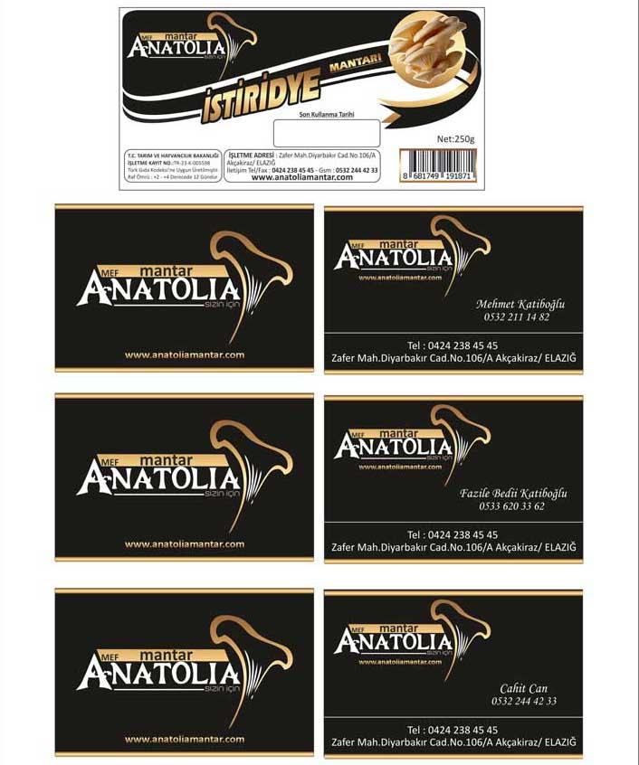 Anatolia mantar